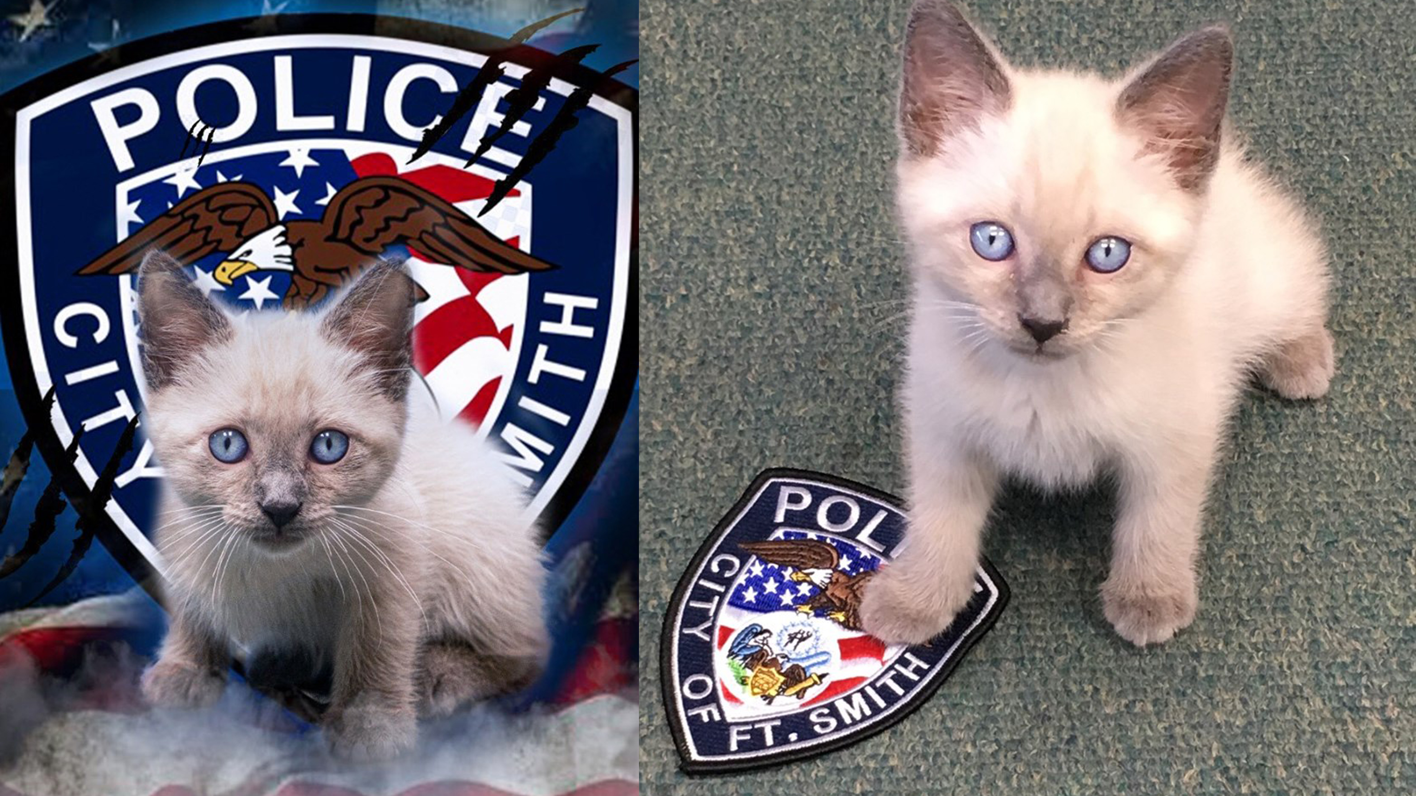 Pawfficer Reporting For Duty Adorable Kitten Joins Ranks